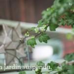 jardin-suspendu-by-libelul