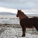 wildhorses-by-libelul