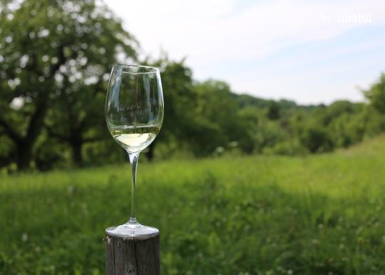 wine-04-by-libelul