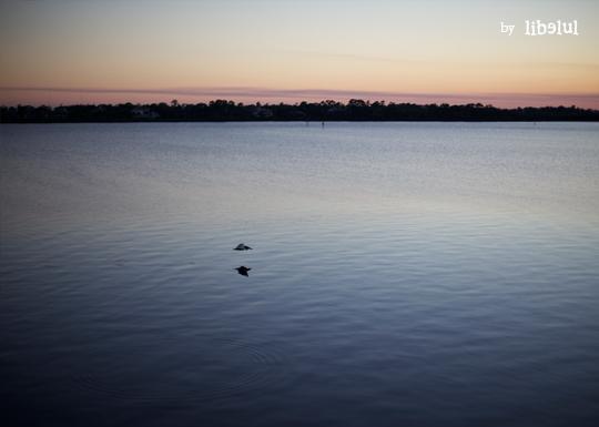 sandpiper-bay-02-by-libelul