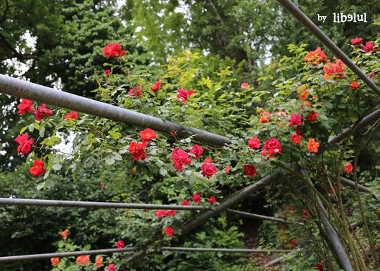 jardin-imaginaire-10-by-libelul