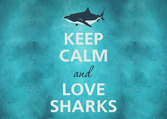 keep-calm-and-love-sharks