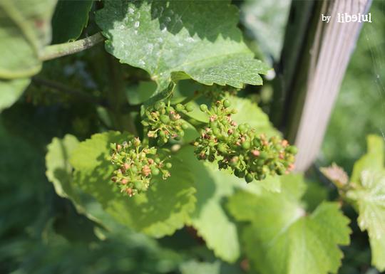 wine-02-by-libelul